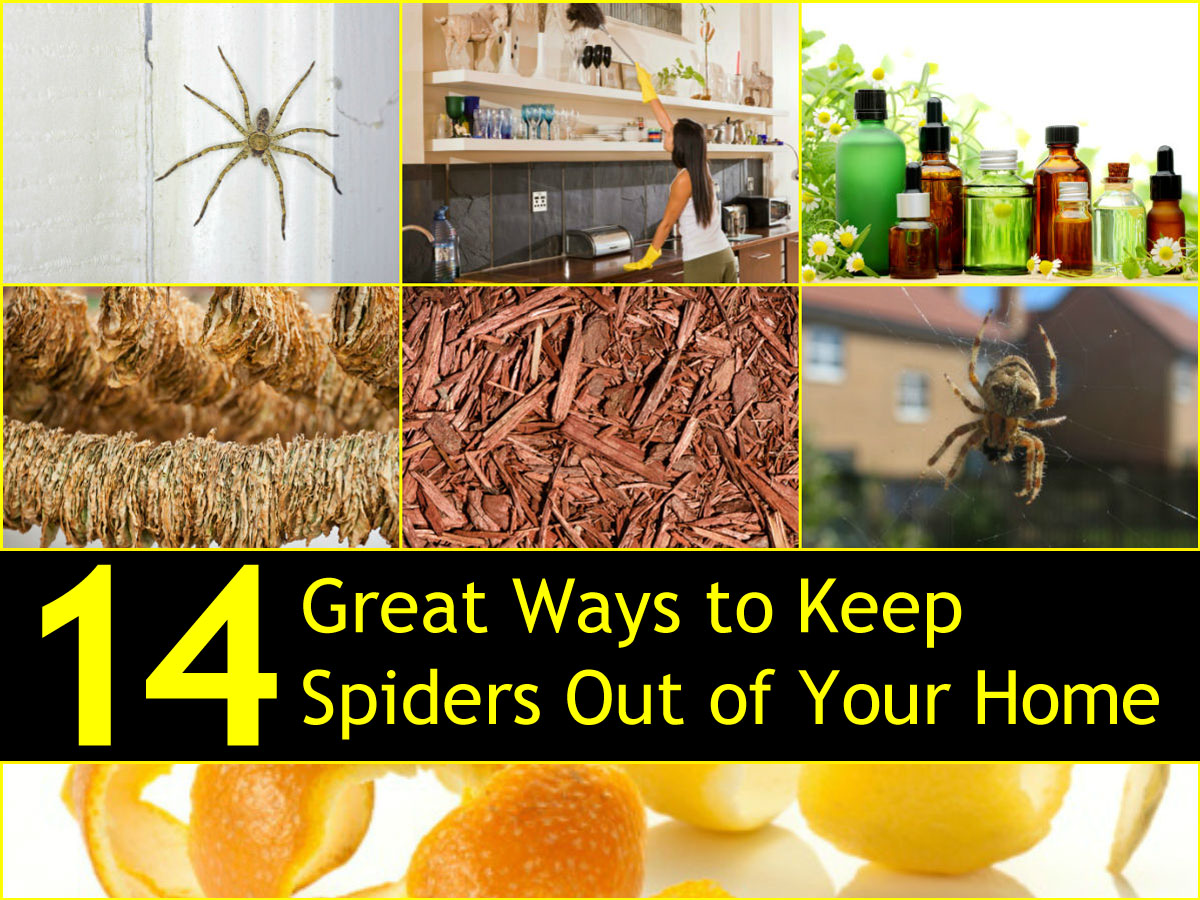 14 great ways to keep spiders out of your home naturally for How to keep spiders out of the house